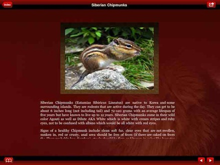 SiberianChipmunk