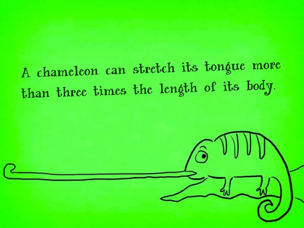 Fun Fact of the Day ~ Friday 26 January 2018 Chameleon-Fact