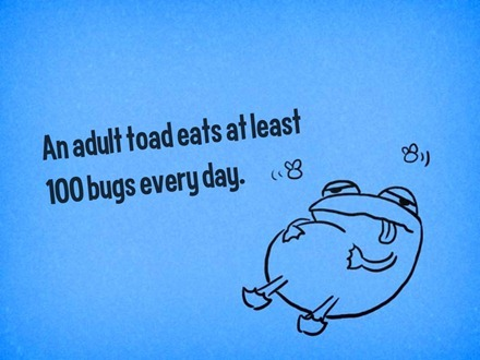 Toad Fact