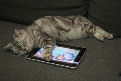 Cats Love iPad