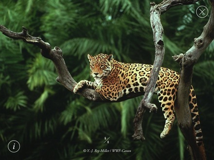 WWF Together Jaguar