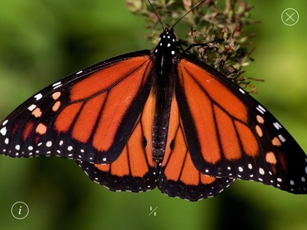 WWF Together Monarch Butterfly